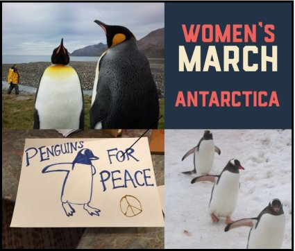 [square with 4 images, starting from upper left clockwise: two penguins face each other with human in background on rocky shore; logo for Women;s March Antarctica, three penguins walk in a line over snow, sign says,